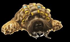 Hundesalon Zellertal